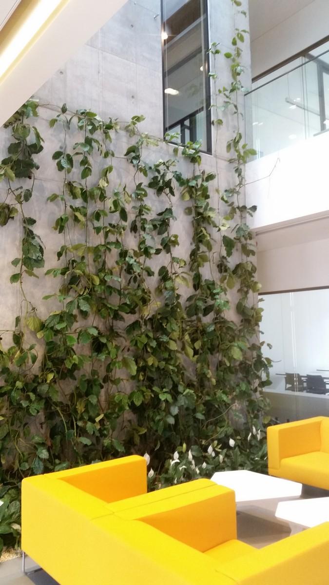Prowadzenie roślinności na linach we wnętrzu